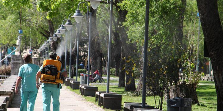 """Municipio intensifica la fumigación contra la """"gata peluda"""""""