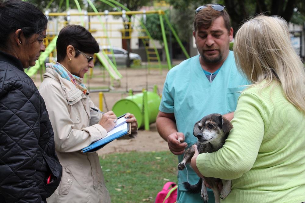 Comenzó la campaña devacunación antirrábicagratuita para perros y gatos