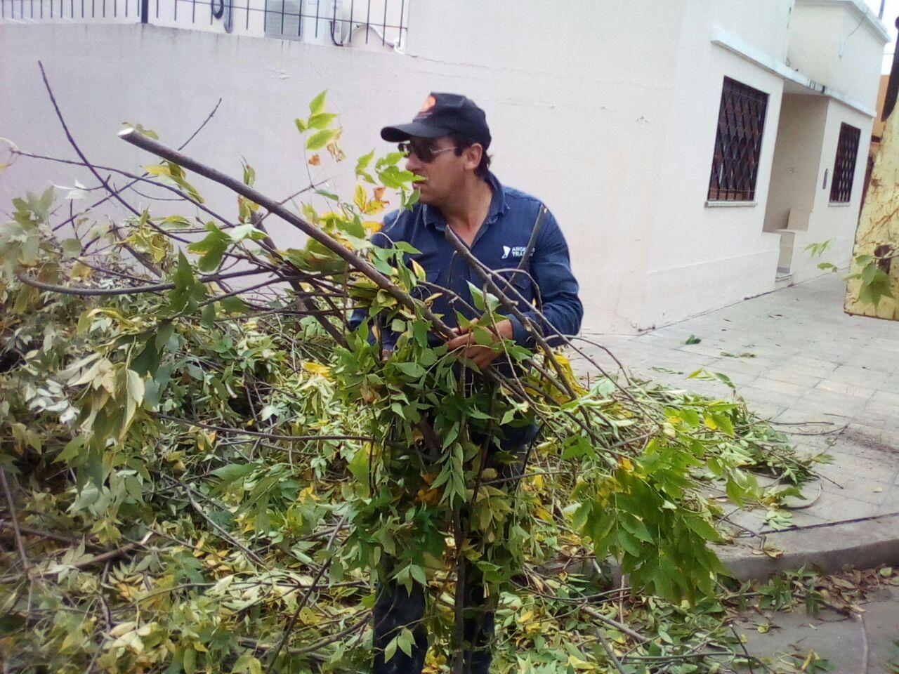 Municipio lleva a cabo plan de limpieza de restos de poda