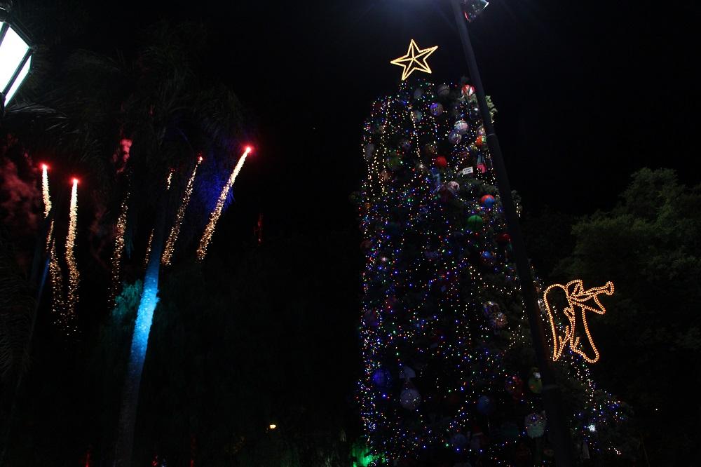 Se encendió el árbol navideño en la Plaza Mitre