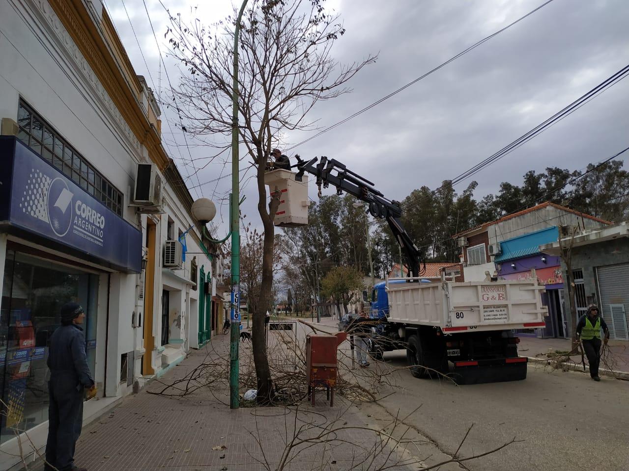Terminaron los trabajos de poda sobre la avenida 11 de Lima