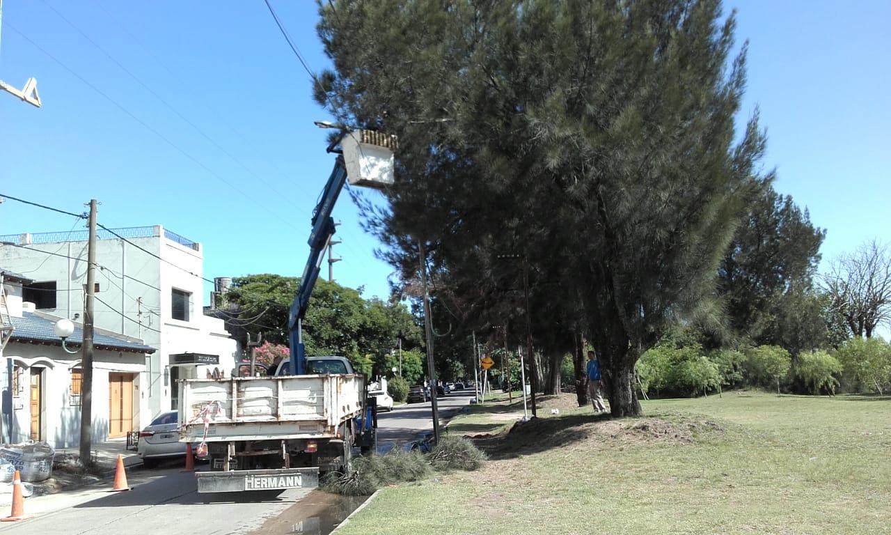Municipio continúa desarrollando tareas de poda en distintos puntos de la ciudad